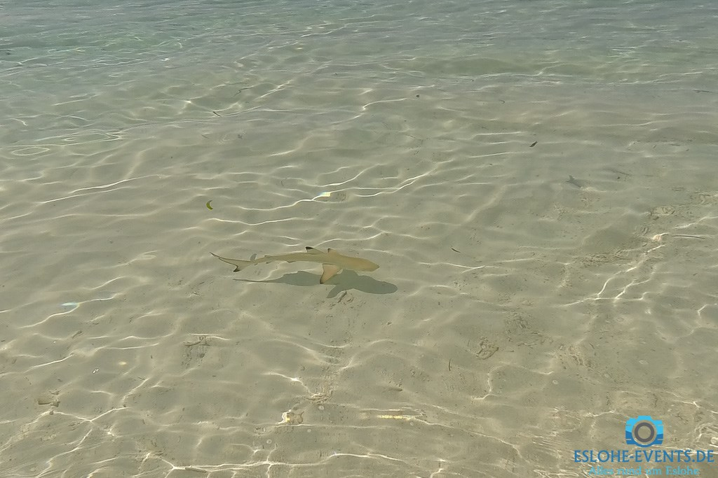 Zwei kurze Videos aus dem Maledivenurlaub