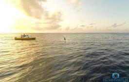 Delfine aus dem Maledivenurlaub 2017
